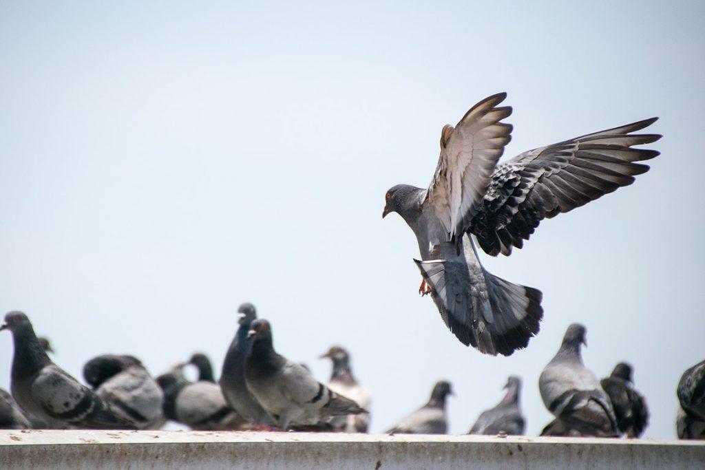 Defending Your Premises Against Birds